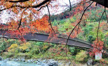 秋季限定 日本- 奥多摩湖赏红叶