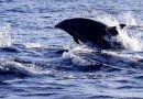 巴厘島海豚之約4日遊